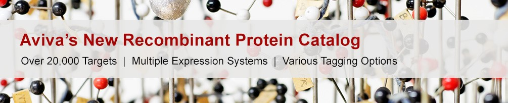 Recombinant Protein Banner
