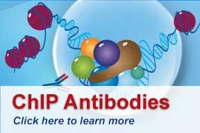 Aviva ChIP Antibodies